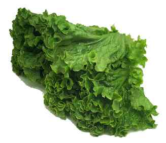 Cook's Thesaurus: Salad Greens