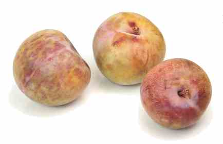 pluot = plumcot This is a plum/apricot cross, with plum dominating ...