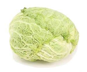Cook S Thesaurus Cabbages